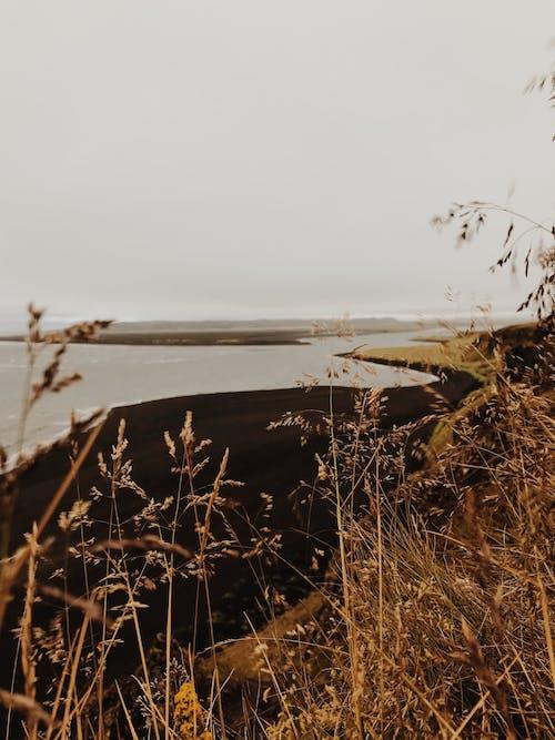 Immagine gratuita di acqua, alba, bagnasciuga, coperto