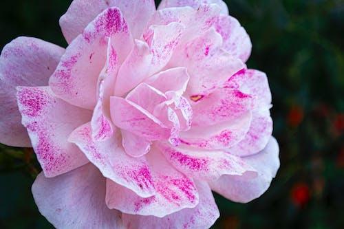 Ingyenes stockfotó flor, jardim, jkakaroto, jonas kakaroto témában