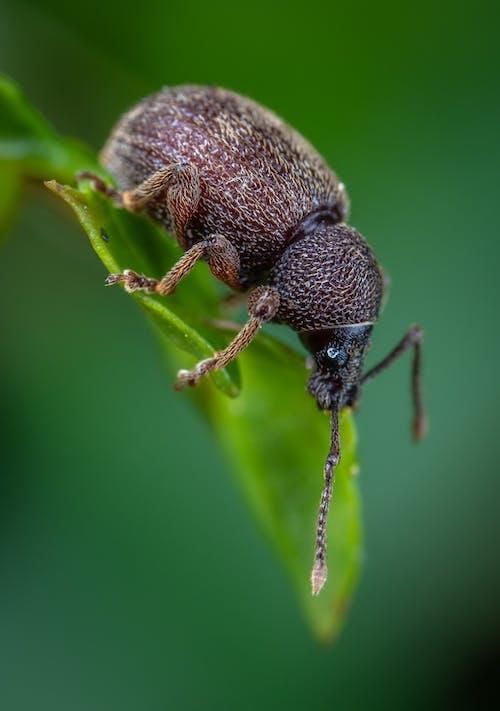 Δωρεάν στοκ φωτογραφιών με beetle, macro, micro, άγρια φύση