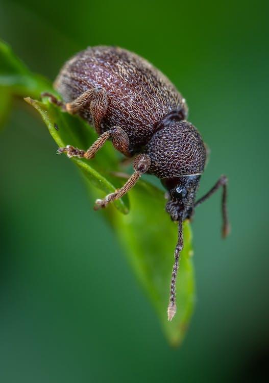 곤충, 곤충학, 녹색