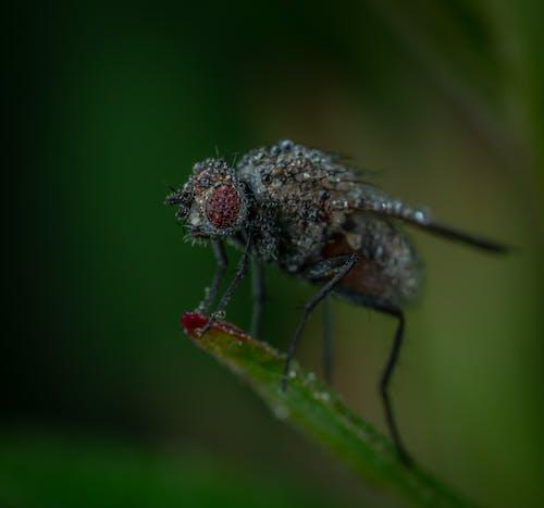 Kostnadsfri bild av fluga, insekt, makro