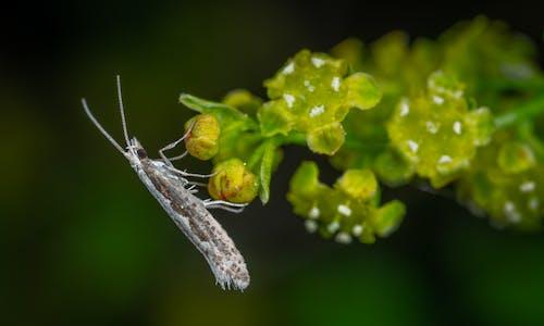 Kostnadsfri bild av fjäril, insekt, makro