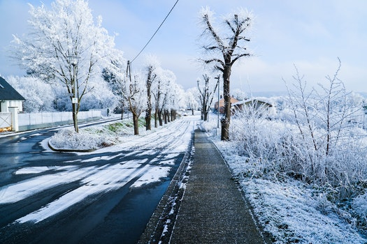 Free stock photo of cold, snow, wood, road