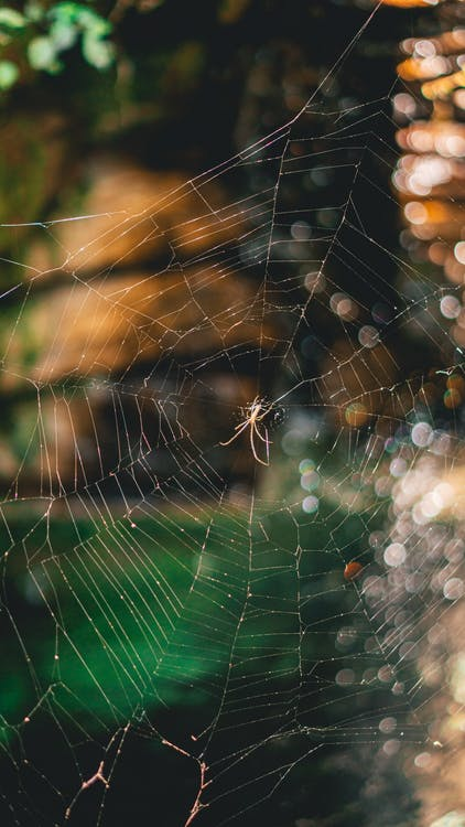 ansa, hämähäkinseitti, hämähäkinverkko
