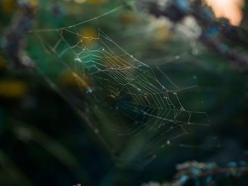 Gratis arkivbilde med edderkoppnett, felle, makro, nett