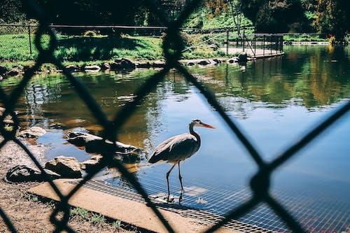 Free stock photo of animal photography, animals, birds, fence