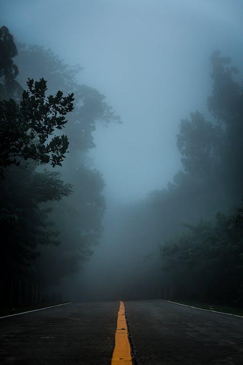 Imagine de stoc gratuită din arbori, ceață, cețos, drum