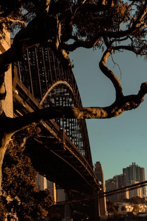 Immagine gratuita di acciaio, alberi, all'aperto, alto