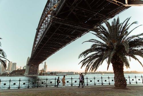Immagine gratuita di architettura, infrastruttura, palma, ponte