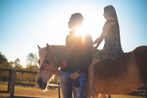 คลังภาพถ่ายฟรี ของ cavalo, ดวงอาทิตย์, ตะวันลับฟ้า, พระอาทิตย์