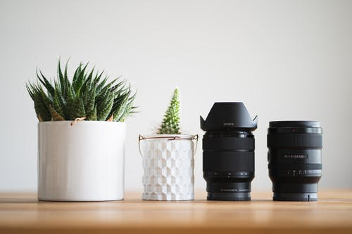 Two Potted Plants next to Dslr Camera Lenses