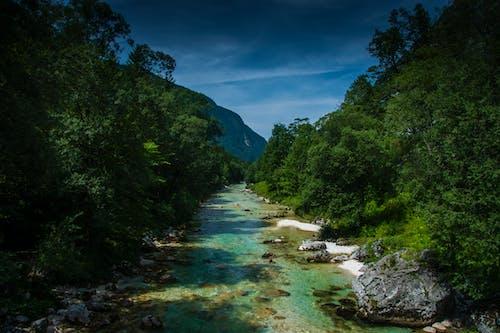 Безкоштовне стокове фото на тему «soca, вода, гора, дерева»
