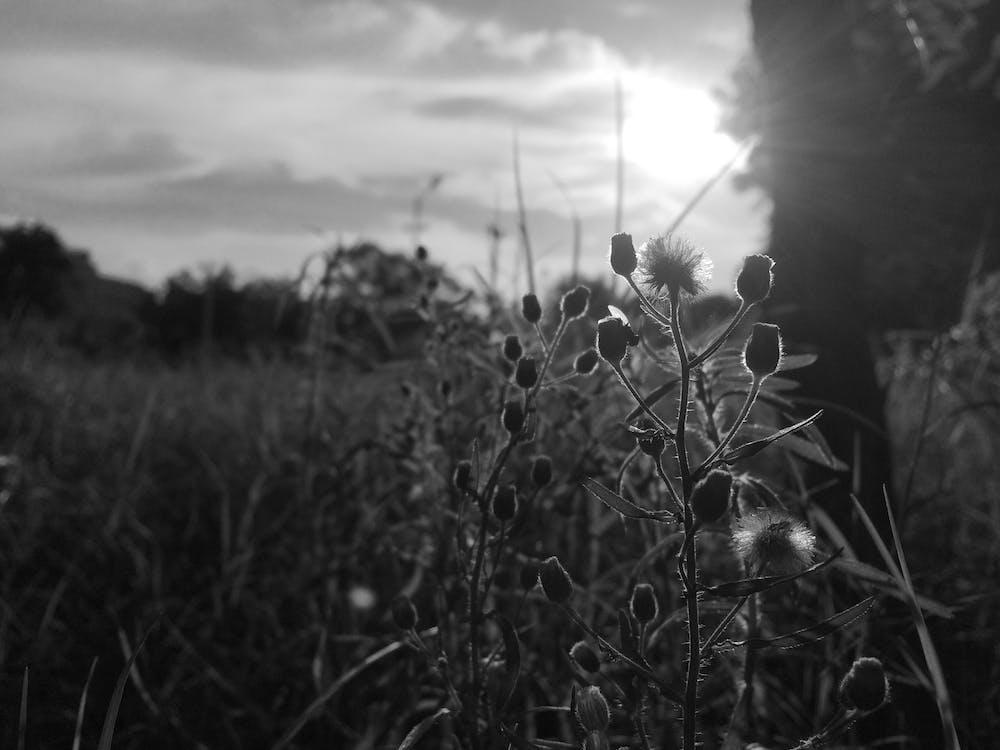 マクロ撮影, 植物, 白黒