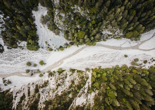 Δωρεάν στοκ φωτογραφιών με αεροφωτογράφιση, δασικός, δέντρα, εναέρια άποψη