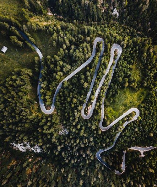Ingyenes stockfotó drónfelvétel, drónfotózás, drónnézet, fák témában