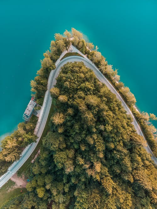 Top View of Road Surrounded by Trees
