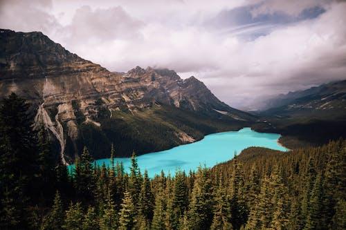 亞伯達省, 健行, 加拿大, 天性 的 免费素材照片