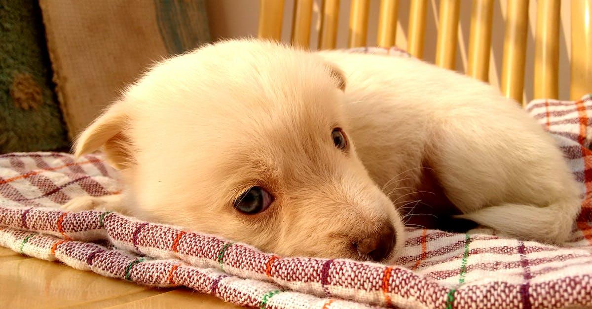 Free stock photo of adorable, animal, baby