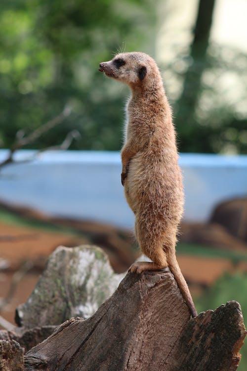 Immagine gratuita di alla ricerca, ambiente, animale, animale selvatico
