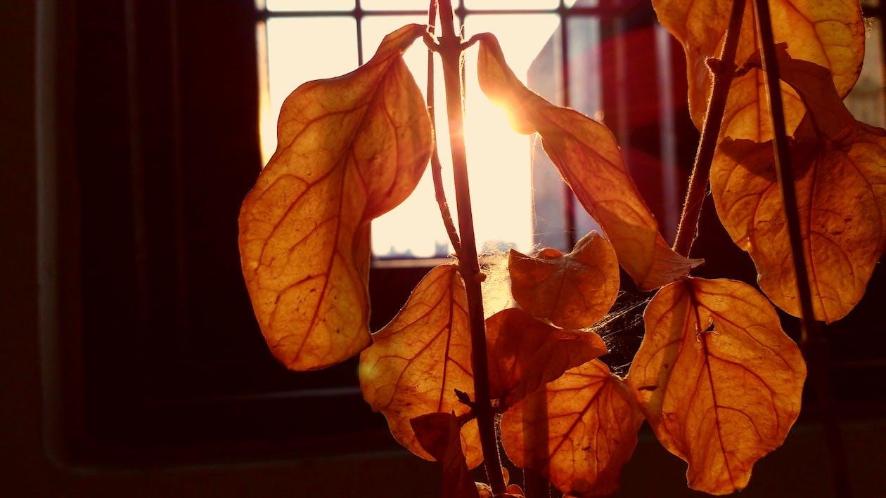 slnečné svetlo, sušené listy