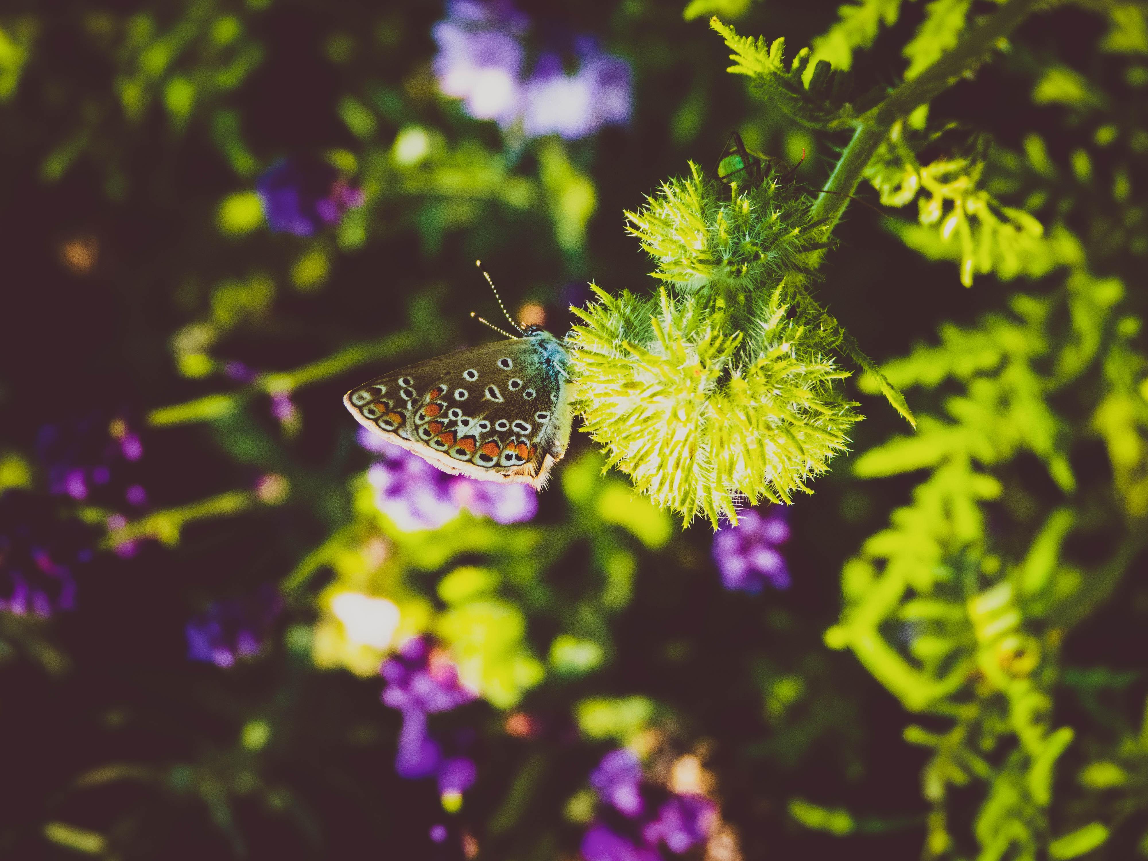 Imagine De Stoc Gratuită Cu Animale Frumoase Colorat Drăguț