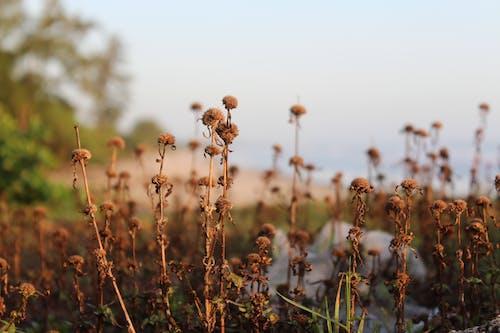 Immagine gratuita di pianta morta