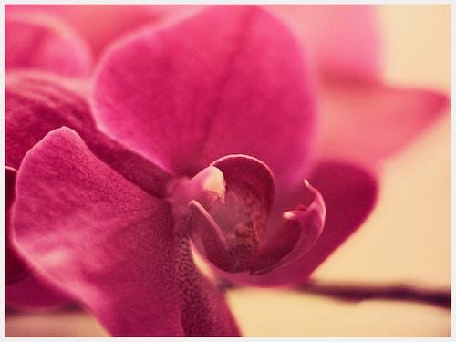 Free stock photo of bokeh, fujifilm, orchid, pink flower