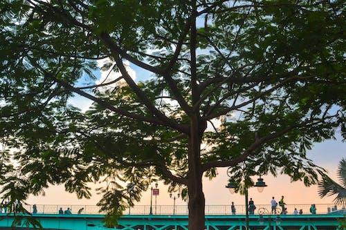 Foto d'estoc gratuïta de arbre de bambú, capvespre, gent, relaxant