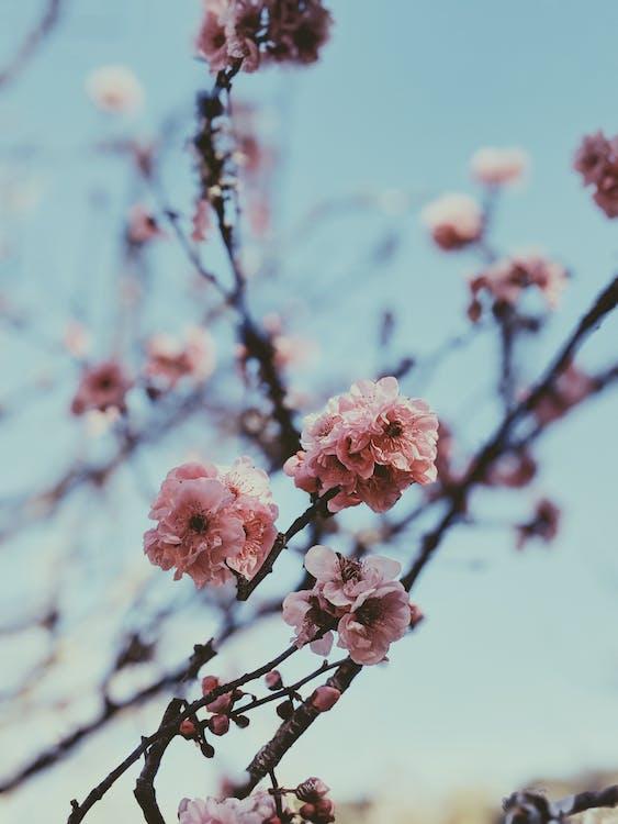 botanique, fleur, fleurir