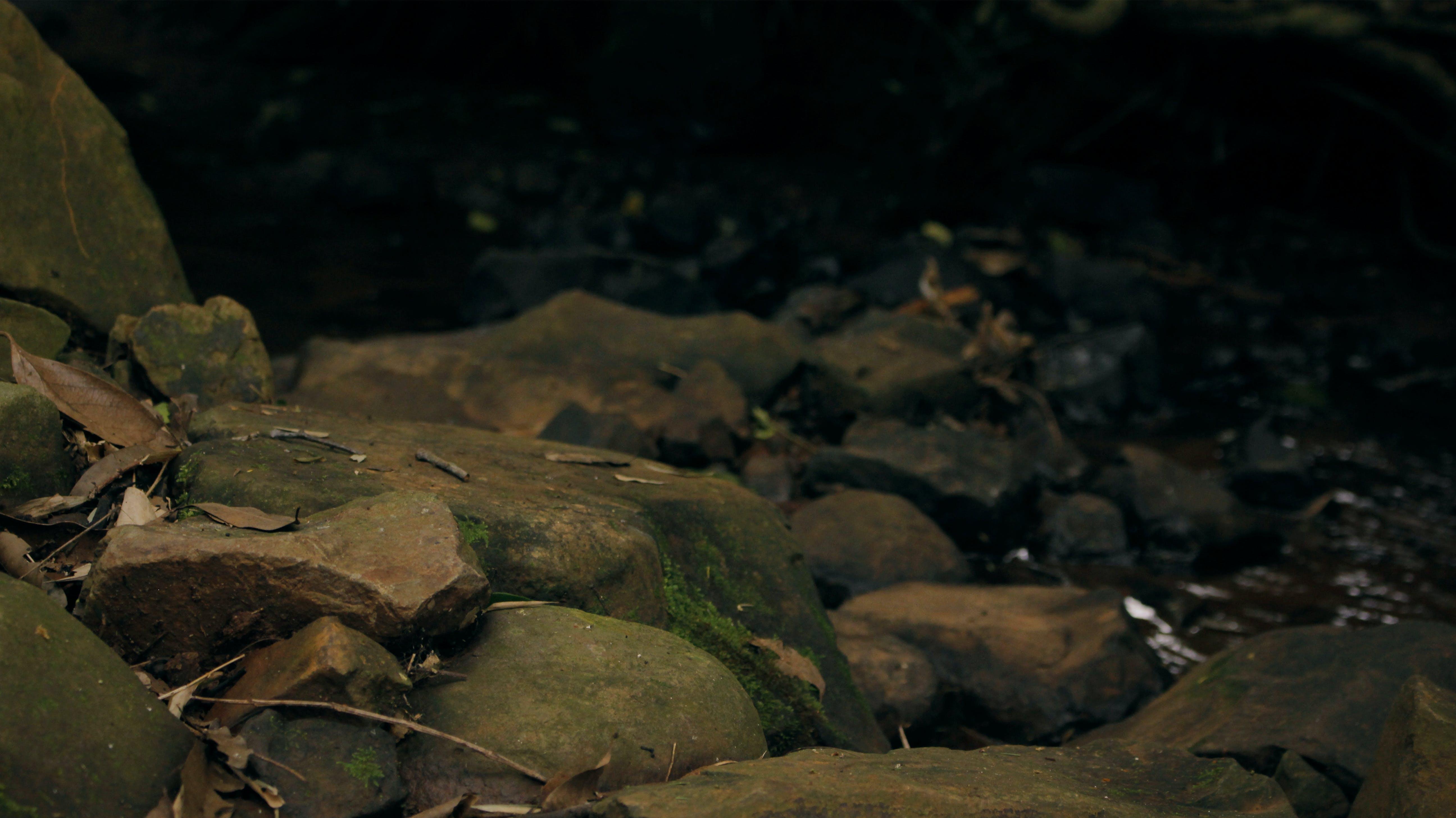 fotografie, grün, natur