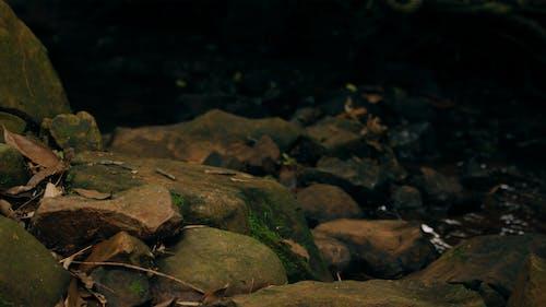 คลังภาพถ่ายฟรี ของ การถ่ายภาพ, การถ่ายภาพธรรมชาติ, ธรรมชาติ, สีเขียว