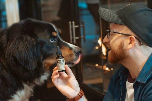 Free stock photo of alternative medicine, cbd for dogs, CBD for headache