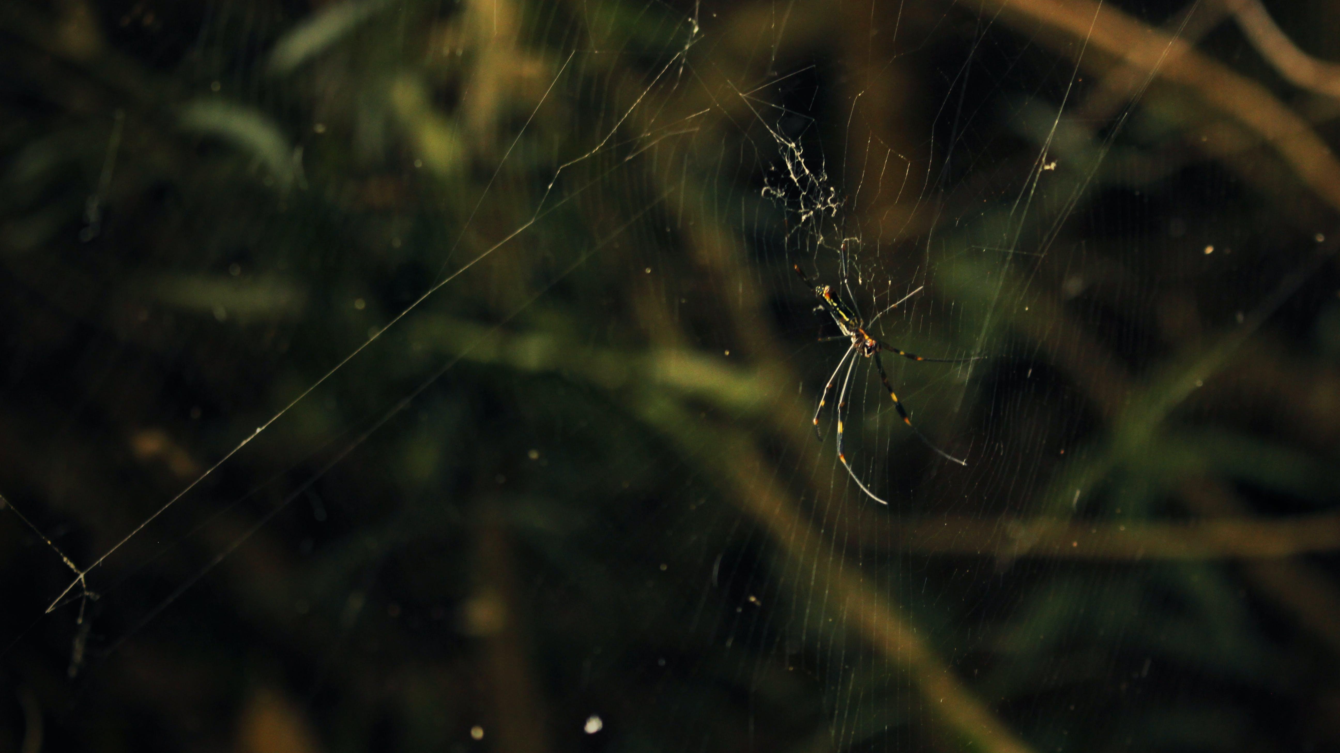 natur, naturfotografie, spinne