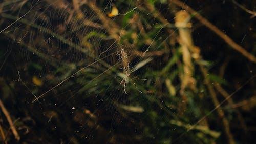 คลังภาพถ่ายฟรี ของ การถ่ายภาพ, การถ่ายภาพธรรมชาติ, ธรรมชาติ, แมงมุม
