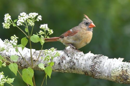 Foto stok gratis alam, bokeh, burung, ekspresi percaya diri