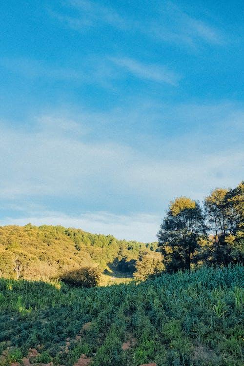 Бесплатное стоковое фото с биотопливо, буря, выращивание, выращивать
