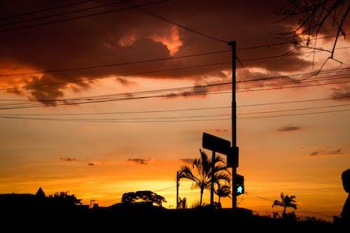 Безкоштовне стокове фото на тему «вечір, високий, влада, дерева»