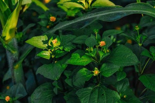Бесплатное стоковое фото с абстрактный, блестящий, боке, весна