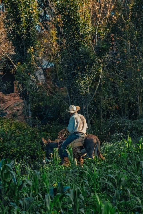 Бесплатное стоковое фото с farmboy, ranchand, ranchhand, Америка