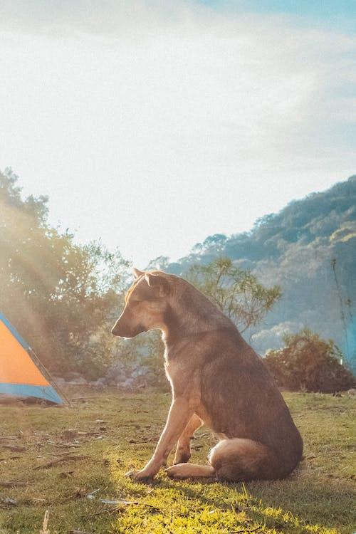 Бесплатное стоковое фото с белый, большой, выращенный, гора