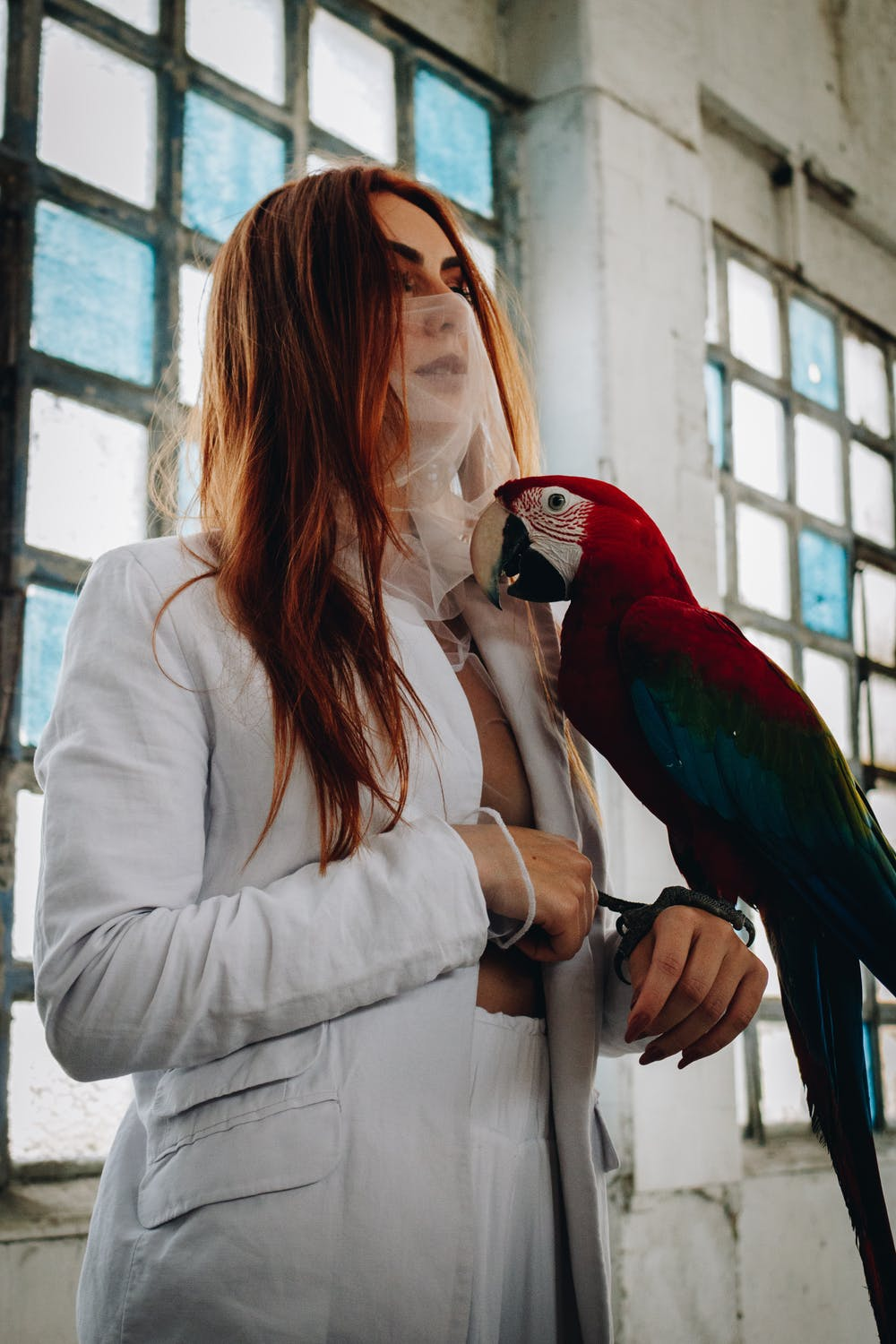 A Macaw perching on woman's hand   Photo: Pexels
