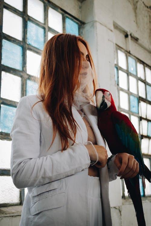 Foto d'estoc gratuïta de animal, au, aviari, cabells pèl-roigs