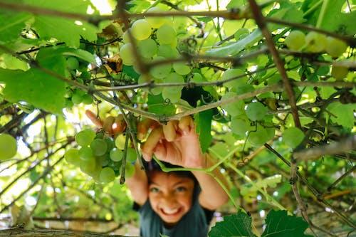 Fotobanka sbezplatnými fotkami na tému Ázijčan, čerstvý, chlapec, farma