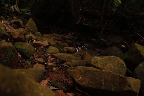 คลังภาพถ่ายฟรี ของ กระแสน้ำ, การถ่ายภาพ, การถ่ายภาพธรรมชาติ, การถ่ายภาพสัตว์ป่า
