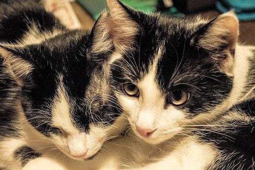 Free stock photo of cats, kittens, Katze, kaätchen
