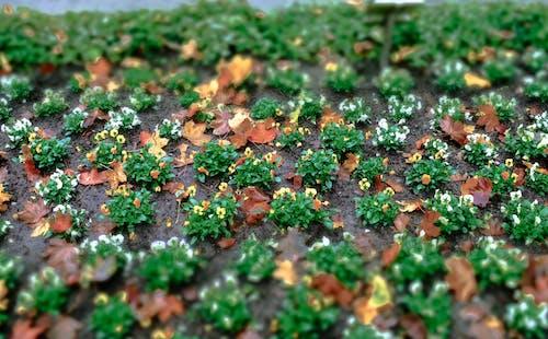 Darmowe zdjęcie z galerii z krajobraz, kwiat, ogród