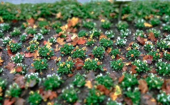 Free stock photo of landscape, garden, flower