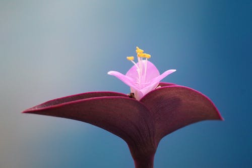 Ilmainen kuvapankkikuva tunnisteilla abstrakti, hauras, kasvikunta, kasvu