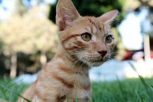 Gratis arkivbilde med dyr, dyrefotografering, huslig, katt
