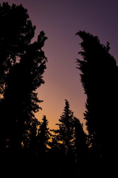 Foto d'estoc gratuïta de الأشجار, السماء البرتقالية, الغابات, روب الشمس الجميل